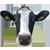 Melk-Drive koe